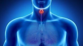 Гипотиреоз? Правильное ли лечение щитовидной железы?!