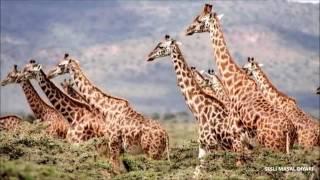 Hayvanlar Alemi - Çocuklar İçin Eğitici Belgesel
