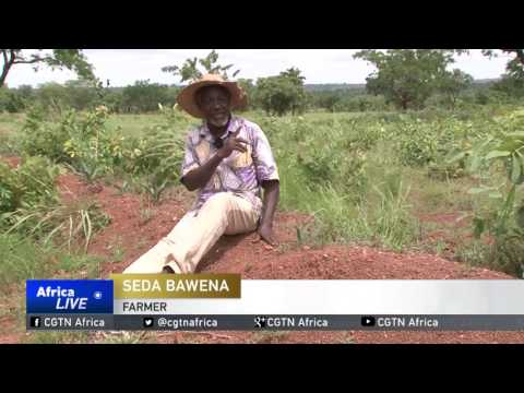 Togolese couple breathing new life to once arid pieces of land