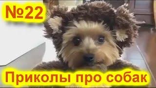 Смешное видео про животных Приколы про собак 2021