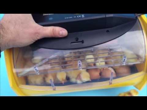 hova bator incubator 2362n instructions