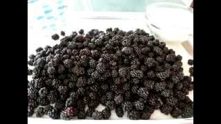 Wild BLACKBERRY  SYRUP - How to make BLACKBERRY SYRUP Recipe