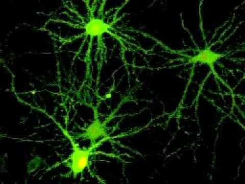 Monitoring spontaneous synaptic activity in neurons with GCaMP6s (1)
