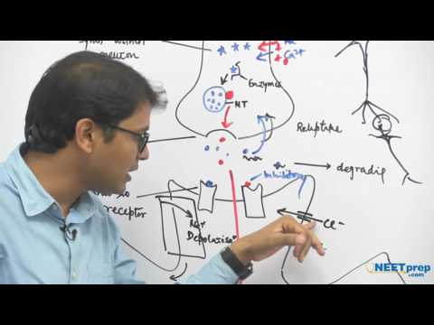 Transmission of Impulse | Neural Control & Coordination | NEET & AIIMS preparation videos