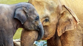 Happy Mother's Day: ELEPHANT MOTHER LOVE - Conquest of Paradise