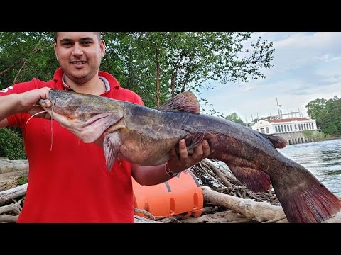 Wisconsin River Dells Dam Catfishing Catch And Cook