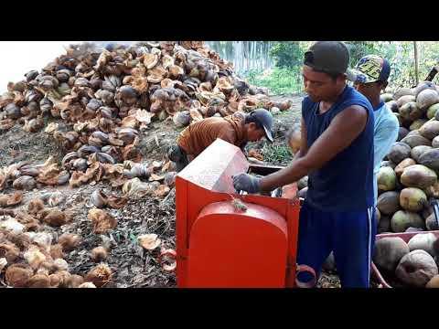 Mesin pengupas kelapa produksi jalur 5 banyuasin sumatera selatan
