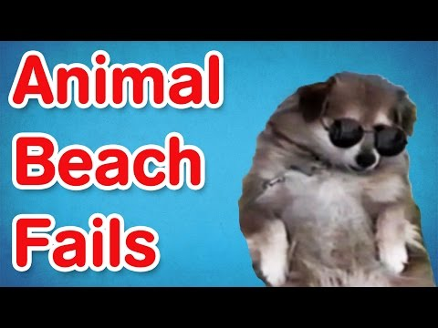 Animal Beach Fails | Fail Compilation