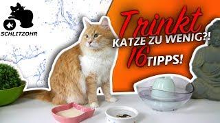 🔥Katze trinkt zu wenig | Ursache + Folgen | 16 Tipps die deine Katze zum Wasser trinken animieren!