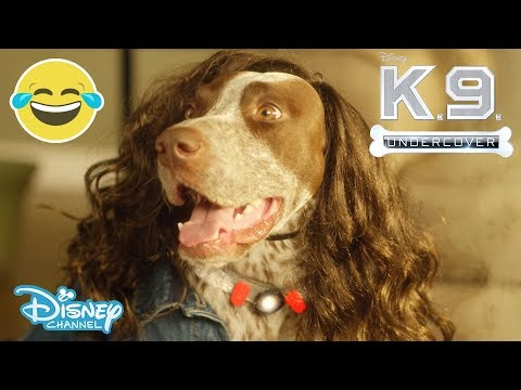 K.C Undercover | Theme Song Music Video  -  K.9 Undercover 🐶| Official Disney Channel UK