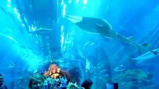 Аквариум ,Дубай(Видео с всех уголочков мира., 2015-03-14T01:33:05.000Z)