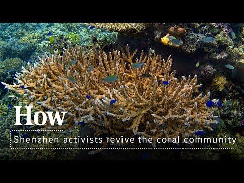 Live: How Shenzhen activists revive the coral community 深圳珊瑚保育行动,助力海洋生态恢复