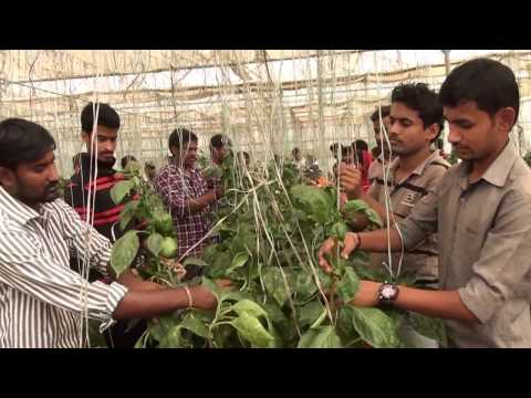 Experiential learning programmes of University Of Agricultural Sciences Dharwad.