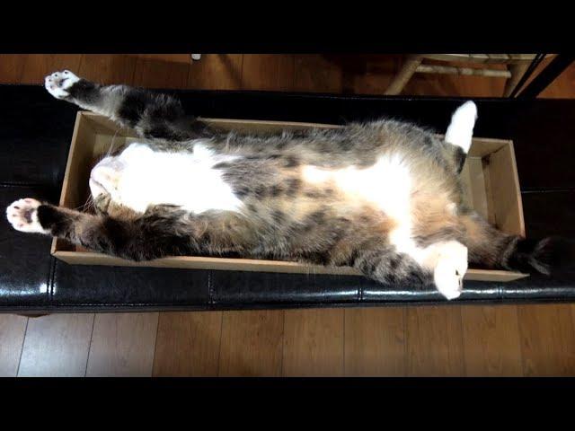 久��り�ゆ�り�る箱�����寛���。-Maru is relaxed in the wide box.-