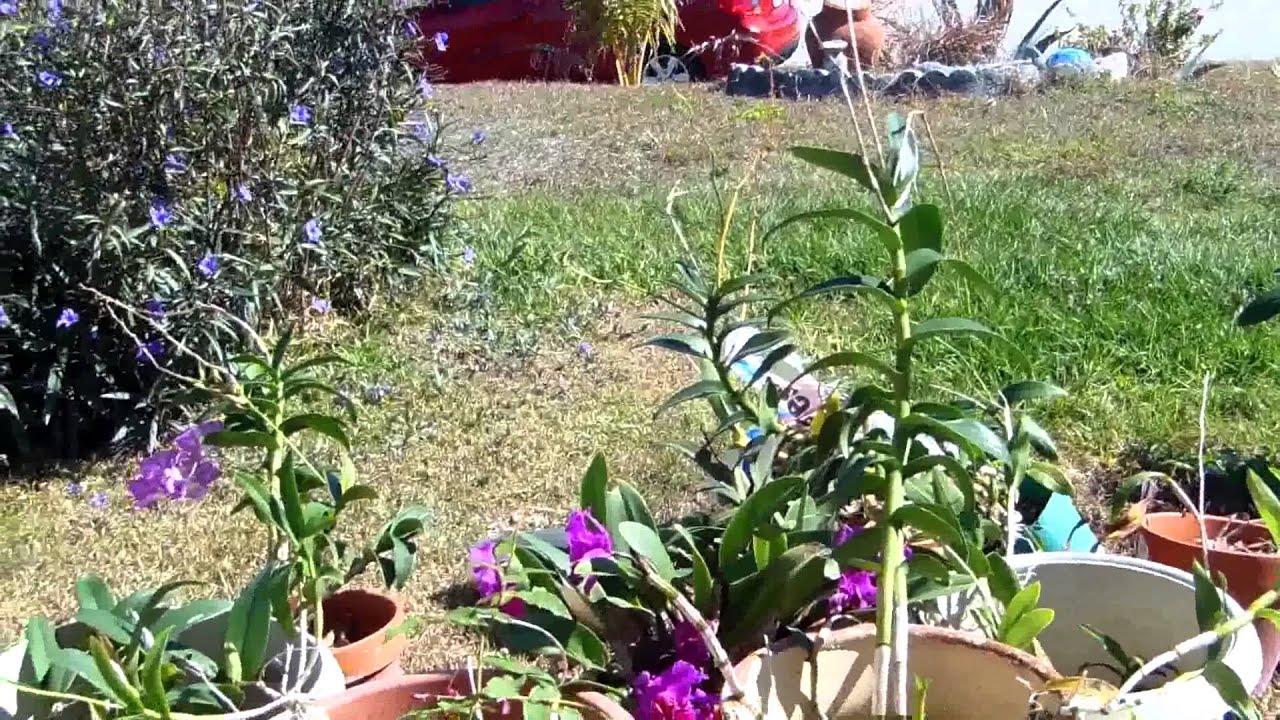 Jardines de mi casa en la florida youtube for Florida v jardines