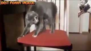 Самые смешные ролики про животных,  приколы про кошек 2015