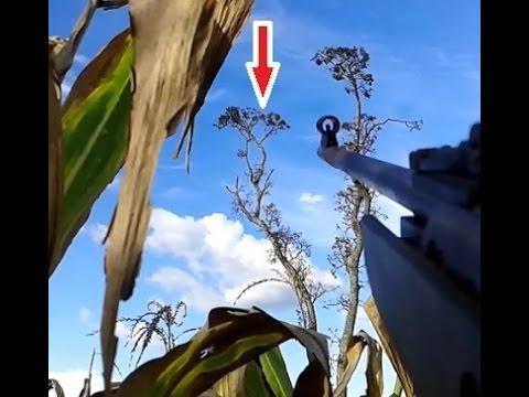 Caça de pombo #04 - CBC Montenegro F22 Standard 5.5mm