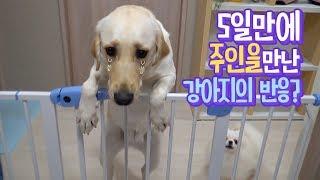 5일만에 주인을 만난 강아지의 반응?
