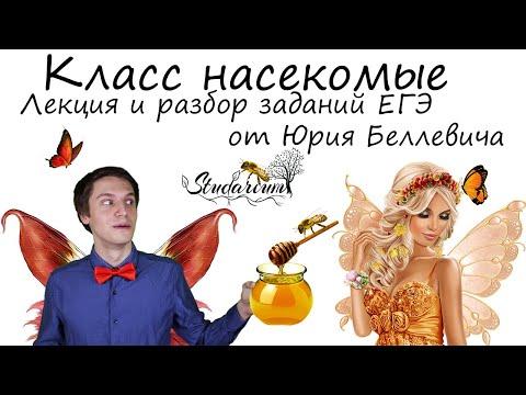 Класс насекомые. Лекция и разбор заданий ЕГЭ от Юрия Беллевича
