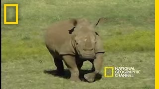 Saving The Black Rhino | National Geographic