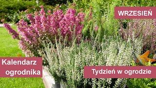 http://tv.ucoz.pl/dir/ogrodnictwo/wrzesien_w_ogrodzie_kalendarz_ogrodnika_na_30_08_05_09_prace_ogrodnicze_we_wrzesniu/4-1-0-365