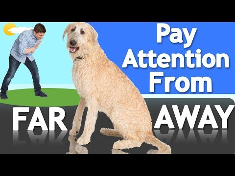 How to Teach your Dog to Listen From FAR AWAY!