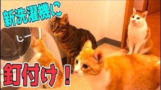 新しい洗濯機に釘付けになる猫たちが可愛すぎたwww