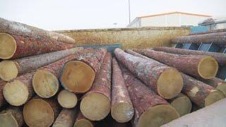 Как борются с незаконными вырубками и перерабатывают лес по правилам? «Таёжный спецназ» 19.10.2020