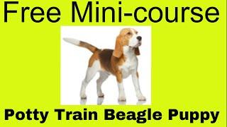 Potty Train Beagle Puppy - Free Mini-course On House Train Beagle Puppy