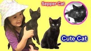 Chị Bí Đỏ & Bé Peanut Nhận Nuôi Chú Mèo Tội Nghiệp Sepper ! Supper Cute Cat Video Adoption Cat Video