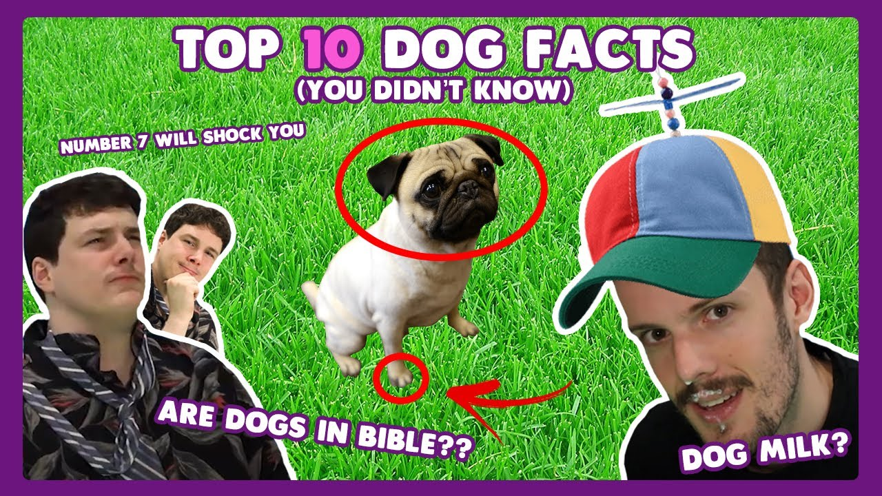 Top 10 Dog Facts (You Didn't Know)