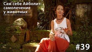 Сам себе Айболит: самолечение у животных // Всё как у зверей #39(, 2015-05-12T21:00:00.000Z)