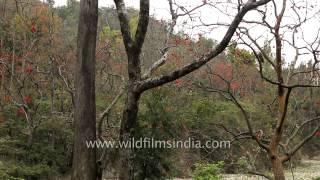 Rajaji National Park, Uttarakhand
