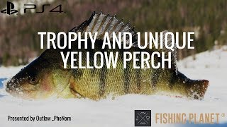 Trophy and Unique Yellow Perch Michigan Fishing Planet