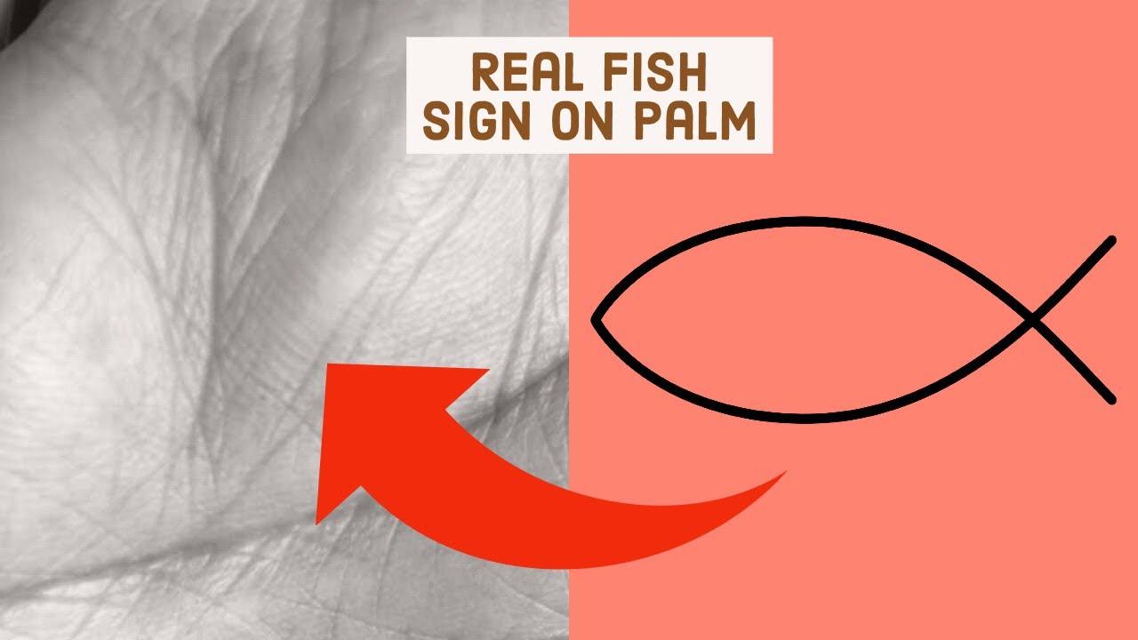 Real fish sign on sun mount, Palmistry