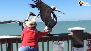 Brave Men Save Pelican Tangled In Fishing Line | The Dodo