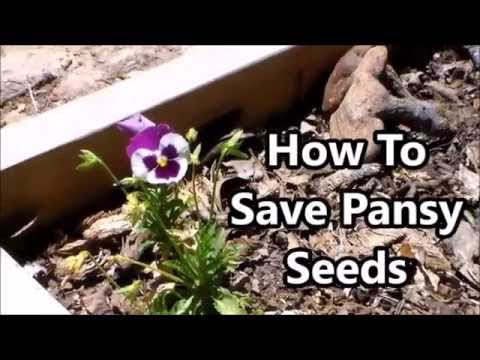 Save Pansy Seeds