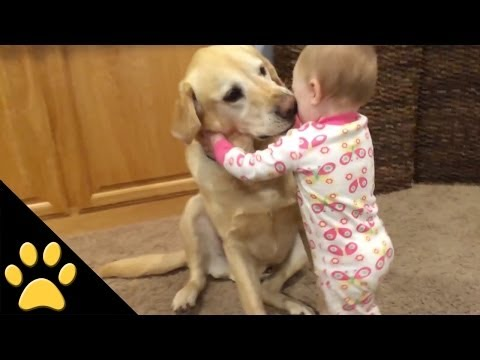Thumbnail: Cute Dogs And Adorable Babies: Compilation