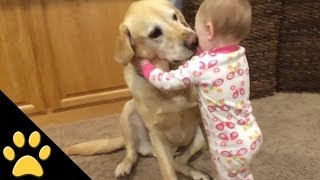 Repeat youtube video Cute Dogs And Adorable Babies: Compilation