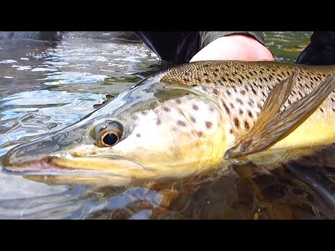 sight-fishing-for-brown-trout-[new-zealand]