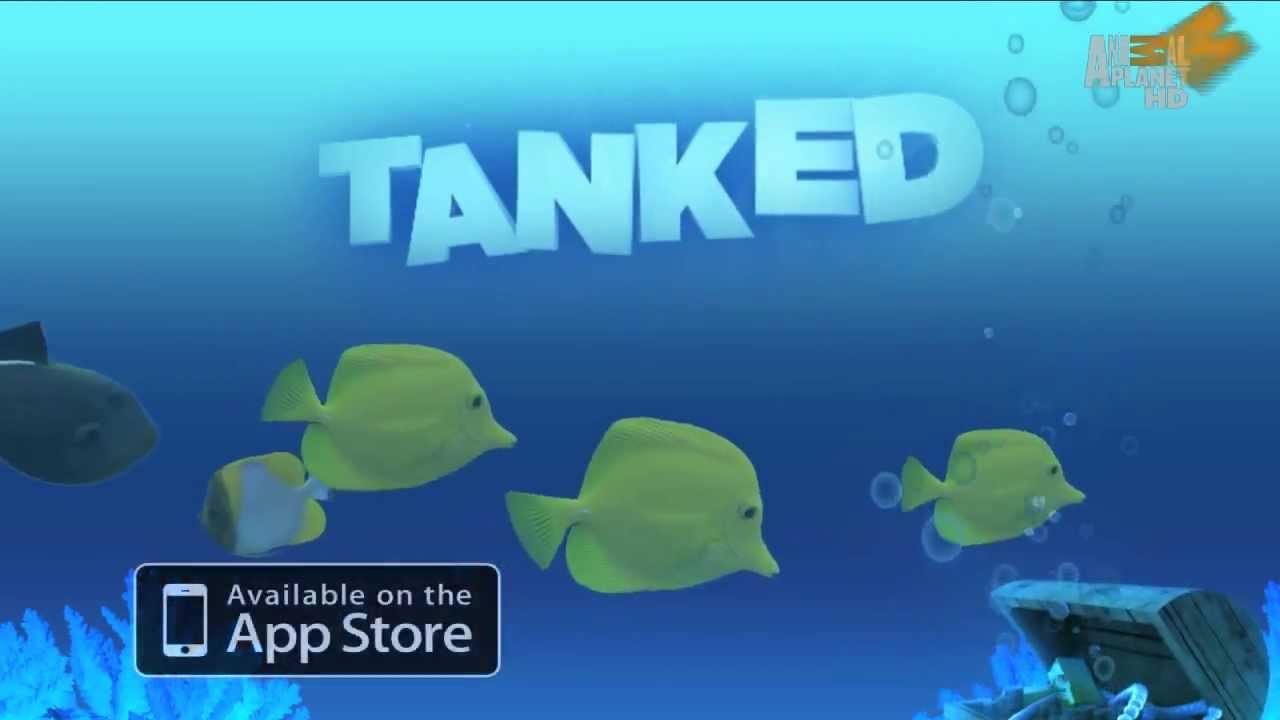 Aquarium fish tank game - Tanked Aquarium Game