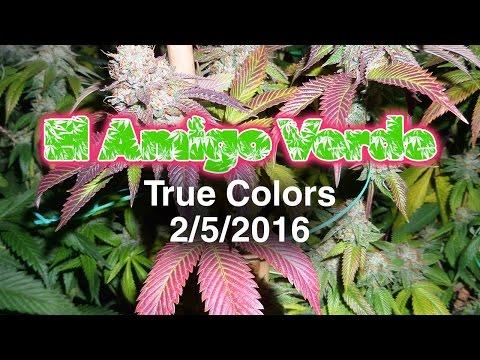 El Amigo Verde - True Colorz (Final Week of Bloom) 2-5-16