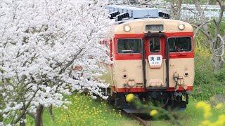 【いすみ鉄道】桜と菜の花とキハ28 久我原~東総元 2017/4/15