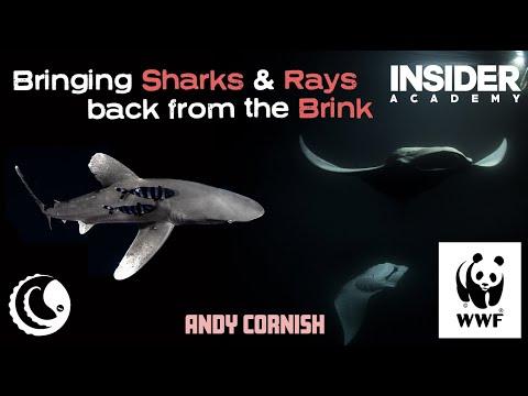 Andy Cornish - WWF - Bringing Shark And Ray Back From The Brink