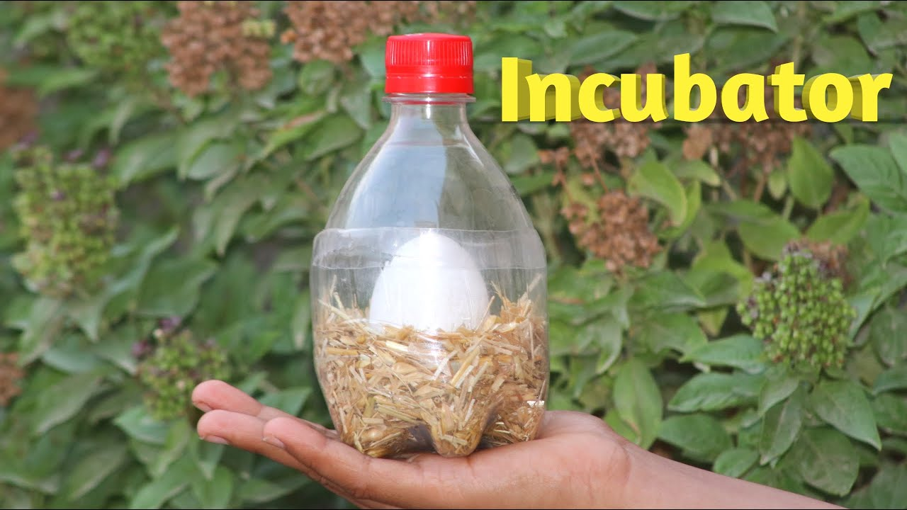 Download How To Make Incubator For Chicken Eggs | Egg Hatching Result 2020