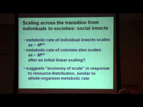 "Dr. James H. Brown -- ""Toward a Metabolic Theory of Ecology"""
