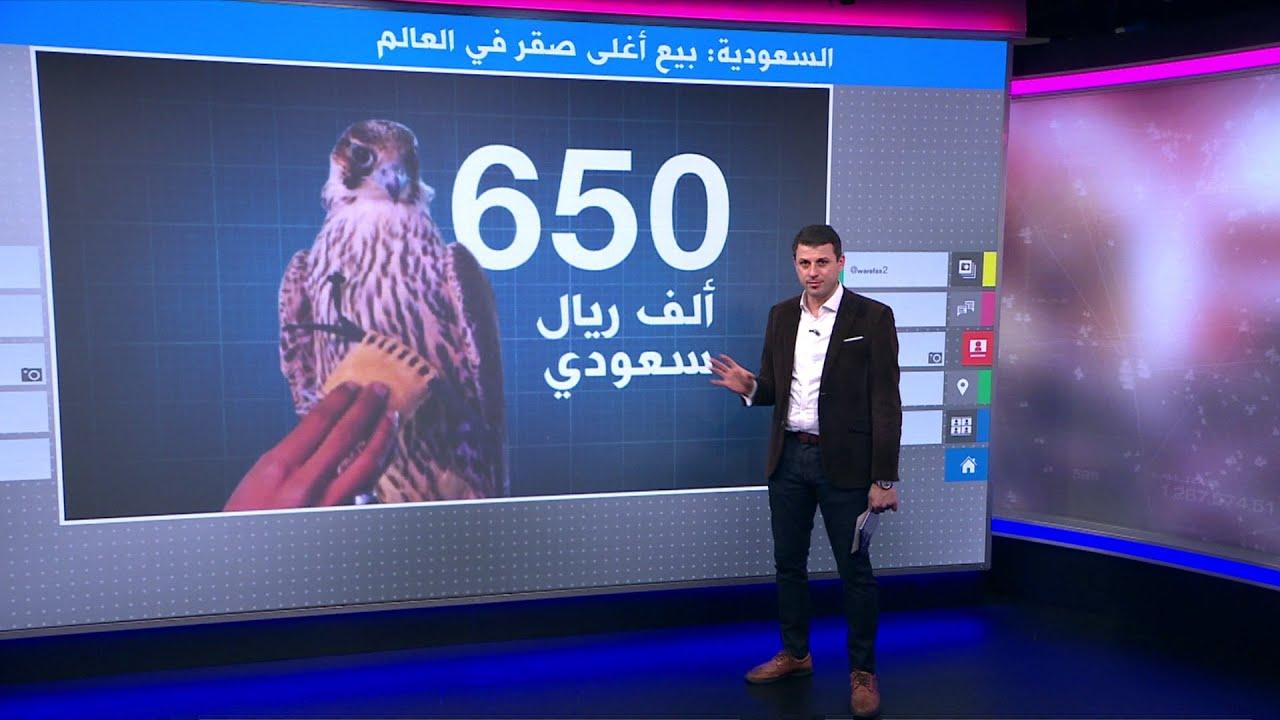 أغلى صقر شاهين في العالم يباع بمزاد في السعودية