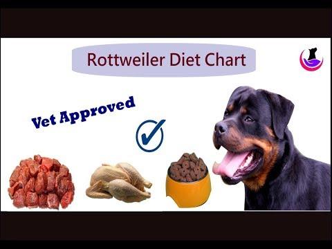 Rottweiler Diet Chart Hindi