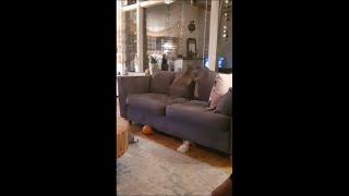 Dog Gets Incredibly Bouncy And Bolts Around The House