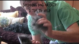 7 Tips To Stop Your Pet From Shedding